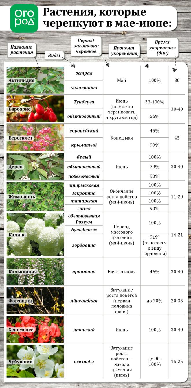 Летнее размножение декоративных растений зелеными черенками