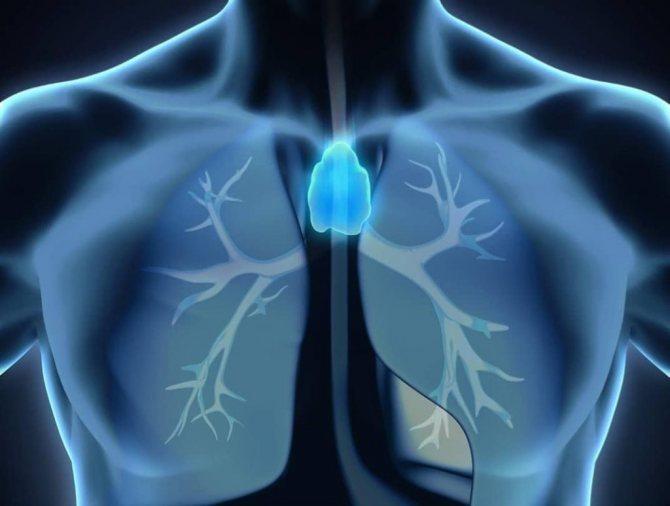 Тимус: Как поддержать здоровье вилочковой железы