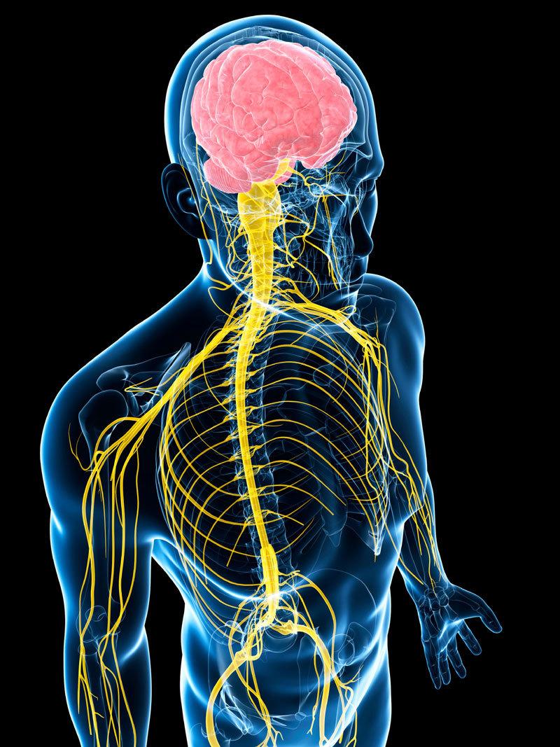 Нейровоспаление из-за депрессии: как его предотвратить
